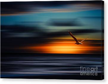 Hannes Cmarits Canvas Print - Flying Into The Sunset by Hannes Cmarits