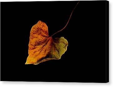 Canvas Print featuring the photograph Flying Leaf by Marwan Khoury