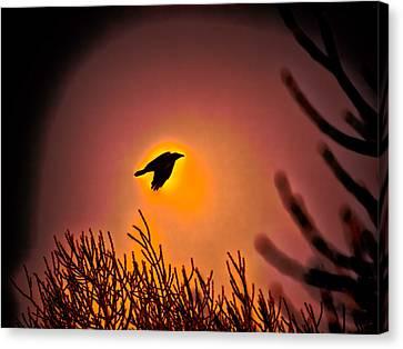 Flying - Leif Sohlman Canvas Print by Leif Sohlman