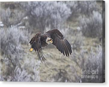Flying Low Canvas Print by Mike  Dawson