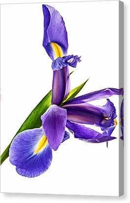 Flying Purple People Pleaser Canvas Print by Steve Harrington