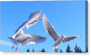 Canvas Print featuring the photograph Flying Seagulls by Karen Molenaar Terrell