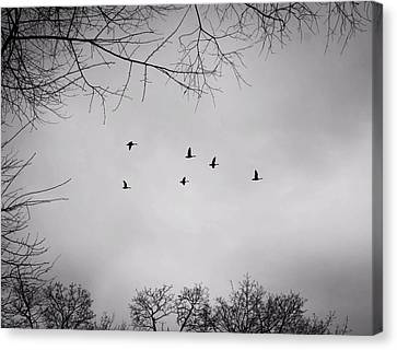 Flying South Canvas Print by Richie Stewart