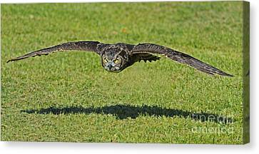 Flying Tiger... Canvas Print