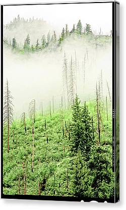 Fog And Trees Canvas Print