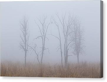 Fog Canvas Print by Angie Vogel