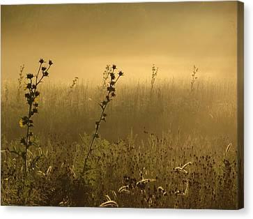 Fog At Dawn Canvas Print by Tim Good