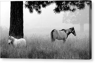 Canvas Print featuring the photograph Fog Bound by Julia Hassett