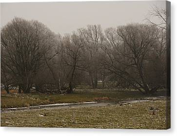 Fog Day Canvas Print by BandC  Photography