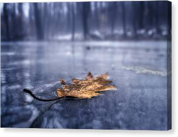 Fog Ice Leaf Canvas Print
