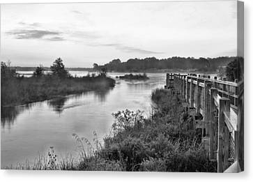 Fog On The Bayou Black And White Canvas Print by JC Findley