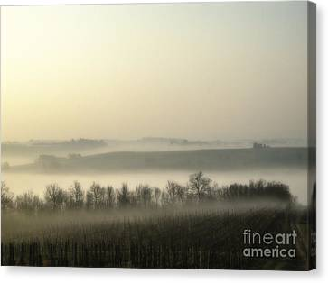 Fog Over Vineyards Canvas Print by Patricia Hofmeester