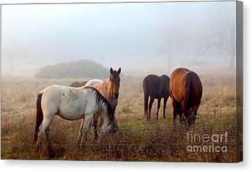 Fog Ponies Canvas Print by Julia Hassett
