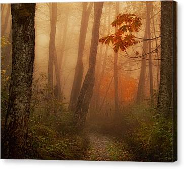Foggy Autumn Canvas Print by Mary Jo Allen