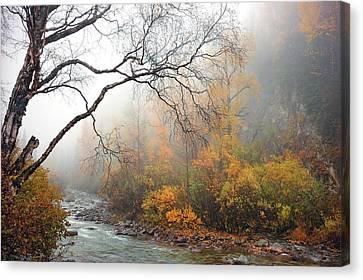 Foggy Autumn Canvas Print