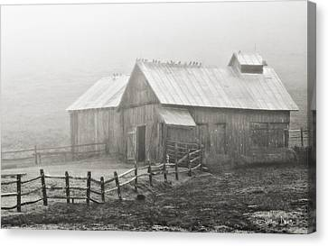 Foggy Barn Canvas Print