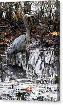 Canvas Print featuring the photograph Foggy Bog Heron by Kenny Glotfelty