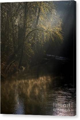 Canvas Print featuring the photograph Foggy Creek by Inge Riis McDonald