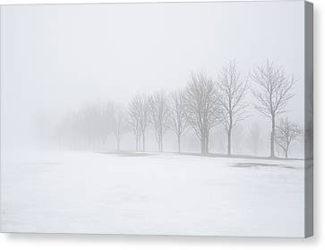 Foggy Day With Snow Canvas Print by Donna Doherty