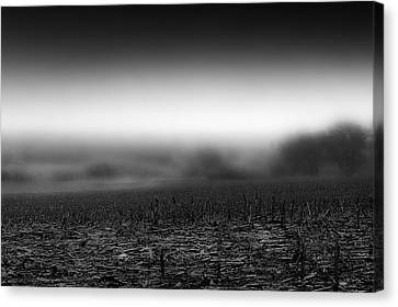 Foggy Field Canvas Print by Tom Gort