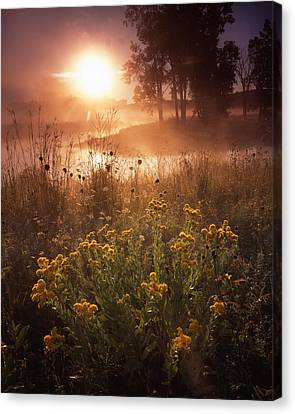 Foggy Flowers Canvas Print