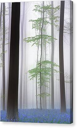 Foggy Forest .... Canvas Print
