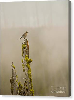 Foggy Friend Canvas Print by Birches Photography