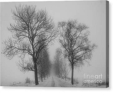 Foggy Lane Canvas Print by Veikko Suikkanen