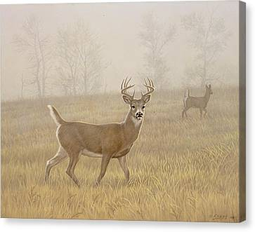 Foggy Morning-whitetail Canvas Print by Paul Krapf