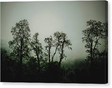 Canvas Print featuring the photograph Foggy Mountain Morning At The Meadows Of Dan by John Haldane