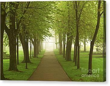 Foggy Spring Park Canvas Print