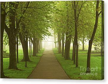 Foggy Spring Park Canvas Print by Elena Elisseeva