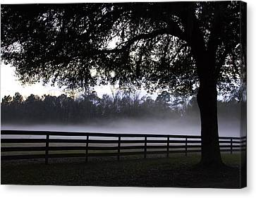 Foggy Pasture Canvas Print