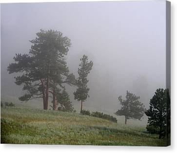 Canvas Print featuring the photograph Foggy Pines by Craig T Burgwardt