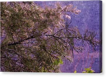 Foggy Spring Rain Morning Canvas Print by Rosemarie E Seppala