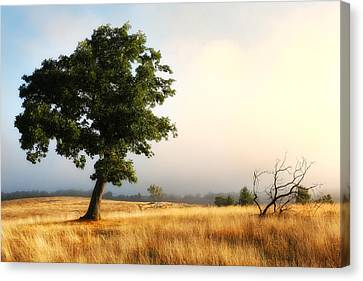 Foggy Summer Morning On Blue Ridge Parkway I Canvas Print
