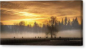 Foggy Sunrise Canvas Print by Cassius Johnson