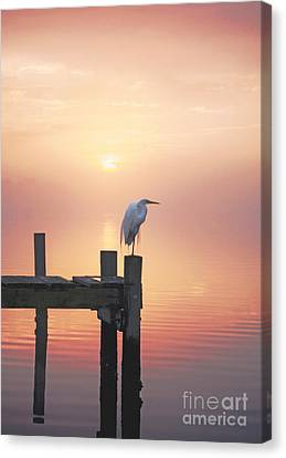 Foggy Sunset On Egret Canvas Print by Benanne Stiens