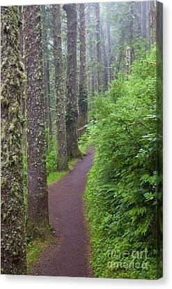 Foggy Trail Canvas Print by Mike  Dawson