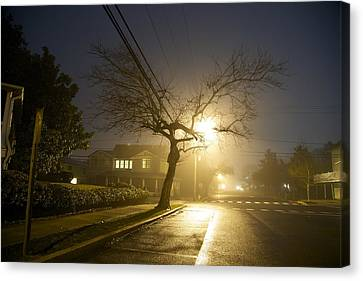 Foggy Tree Canvas Print by Beau Finley