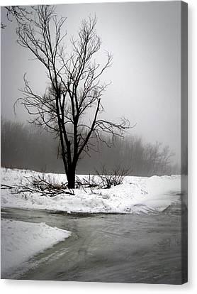 Canvas Print featuring the photograph Foggy Tree by Kimberly Mackowski