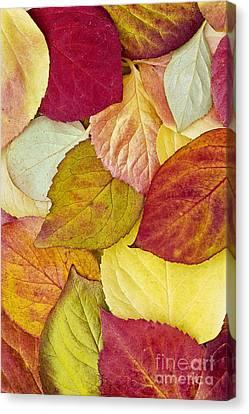 Foliage Quilt Canvas Print by Alan L Graham