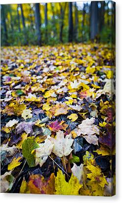 Canvas Print featuring the photograph Foliage by Sebastian Musial