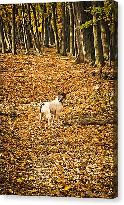 Canvas Print featuring the photograph Follow Me by Phil Abrams