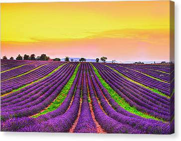 South Of France Canvas Print - Follow My Dreams by Midori Chan