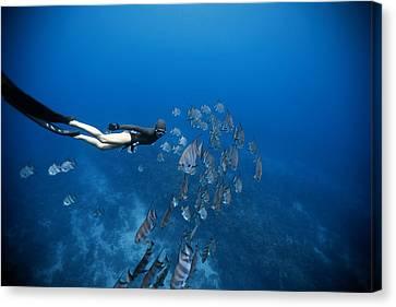 Apnea Canvas Print - Follow The Fish by One ocean One breath