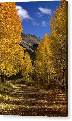 Canvas Print featuring the photograph Follow The Gold by Ellen Heaverlo