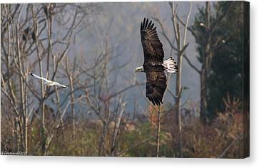 Follow The Leader  Canvas Print by Glenn Lawrence