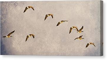 Follow The Leader Canvas Print by James BO  Insogna