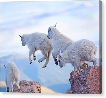 Follow The Leader Canvas Print by Jim Garrison